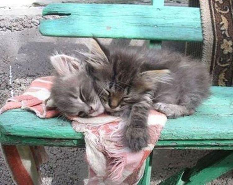 Cat♡ Cat Hello World Popular Photos good night :)