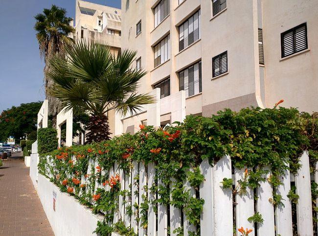 Ashkelon. Autumn. October 2015. Ашкелон. Осень. Октябрь 2015. Nexus 6 город City Ashkelon Ашкелон Palm Flowers