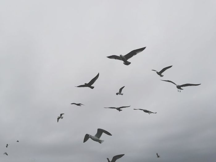 Look Up Birds Of EyeEm  Flying Bird Animal Themes Animal WildlifeMy Year My View Animals In The Wild Flock Of Birds On The Move Animal Low Angl E View Cloud - Sky Beauty In Nature Outdoors Day Large Group Of Animals Sky Mid-air EyeEm Gallery Eye4photography  Look Up Setúbal Portugal HuaweiP9 Capturedonp9
