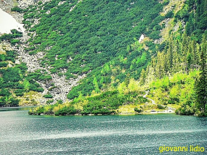 Tree Green Color Growth Nature No People Day Leaf Outdoors Willow Tree Water Sky Polonia  Polska Natura Poland Morskieoko Landscape Mountain Foto Scenics Reflection LakeBeauty In Photo Photography Travel Destinations Green Color