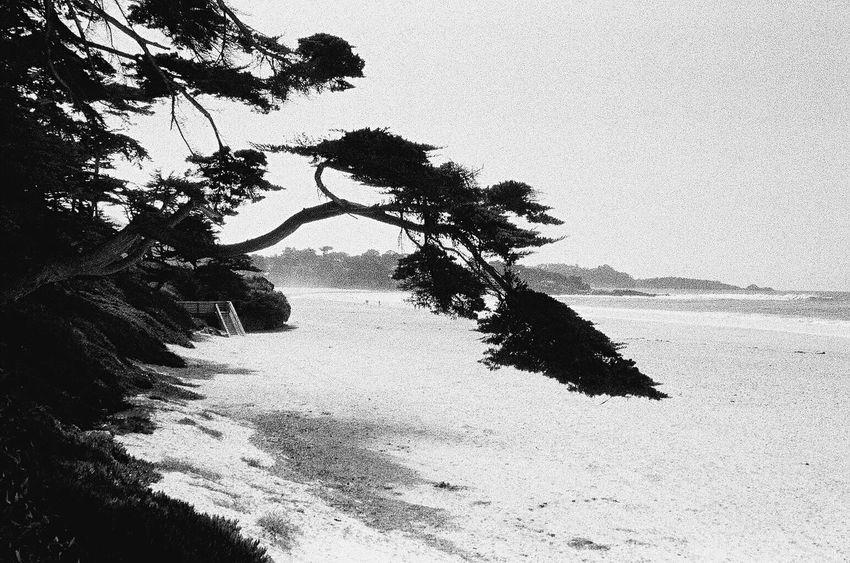 NATURA Classica Carmel California Beach Sea Sand Nature Outdoors Koduckgirl Grainy Photo Film Ilford Delta 3200 Blknwht