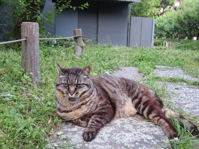 Day Domestic Cat Domestic Animals One Animal Outdoors No People Cat Stray Cat Relaxing Yawning Cat