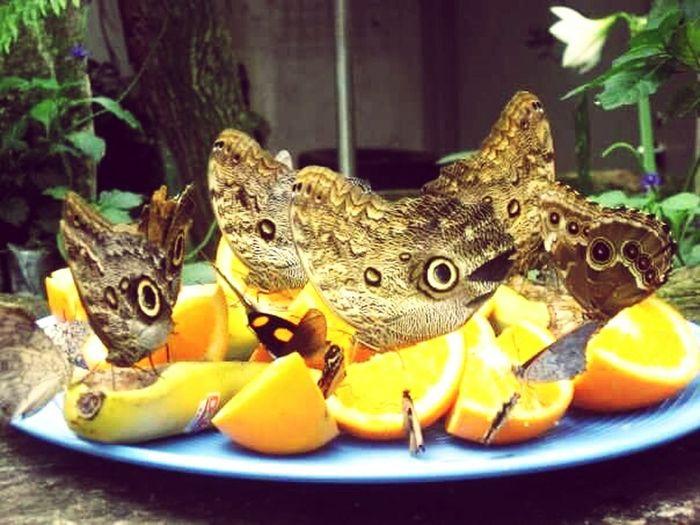 43 Golden Moments Golden Butterflies