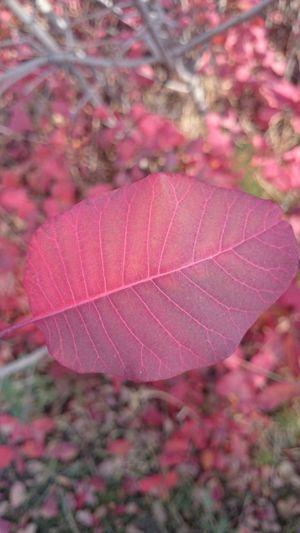 Природа Осень 🍁🍂