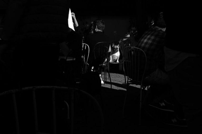 Bucharest, 2017 Blackandwhite Photography The Street Photographer - 2017 EyeEm Awards The Portraitist - 2017 EyeEm Awards Monochrome Light And Shadow Blackandwhite Black And White Street City Life Black Color Dog Animal Pet EyeEmNewHere EyeEm Selects Wine Not
