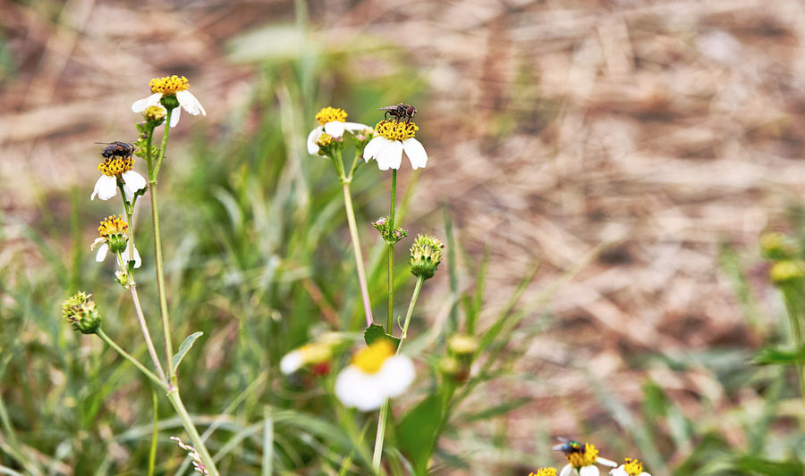 Lord of the Flies Animal Themes Animals In The Wild Beauty In Nature Bee Blooming Close-up Day Flower Flower Head Focus On Foreground Fragility Freshness Growth Insect Nature No People One Animal Outdoors Petal Plant Pollination Yellow