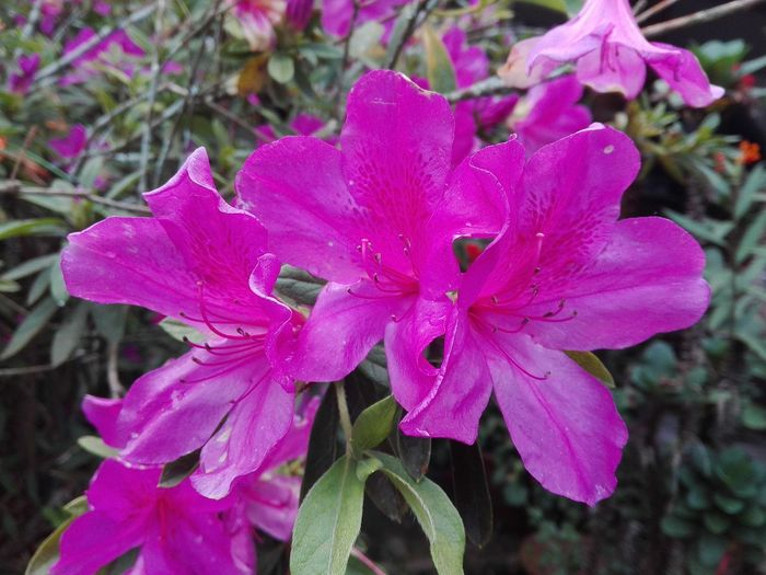 Beauty In Nature Nature Plant No People Outdoors Pink Color Flower Flower Is Ping Color Focus On Foreground Ping Color Flower Head