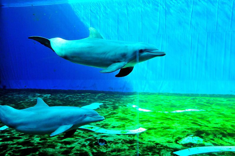 Dolphins Acquario Di Genova Genoa-Italy Aquarium Genova UnderSea