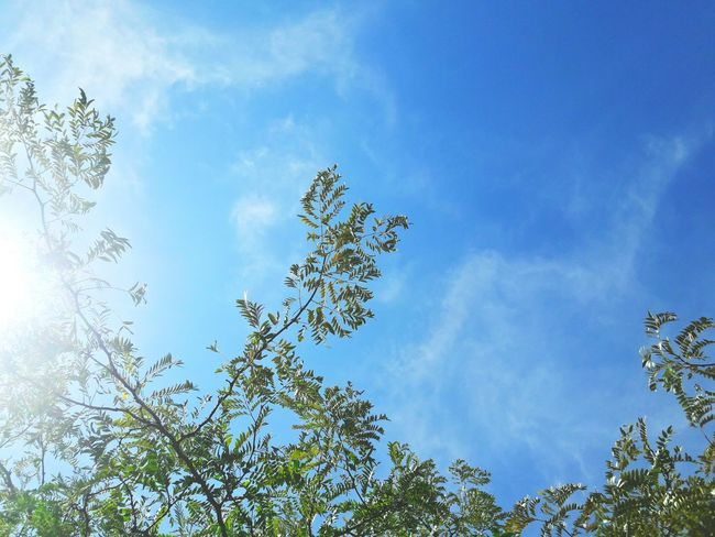 Nature Sky Low Angle View Tree Beauty In Nature No People Day Blue Outdoors Leaf Branch Freshness Fragility Close-up