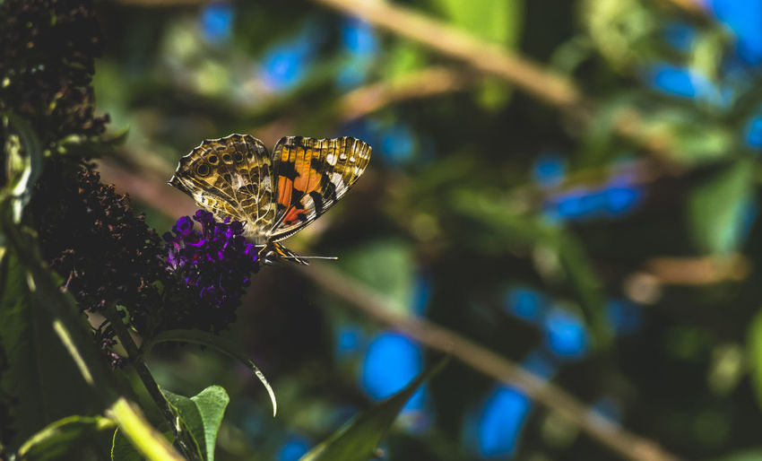 Insect One Animal Animal Wildlife Animals In The Wild Butterfly - Insect Animal Themes Close-up Nature No People Fragility Day Outdoors Beauty In Nature Flower Freshness Hull City Of Culture 2017 The Great Outdoors - 2017 EyeEm Awards Nature