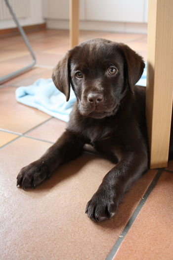 Cute puppy sitting on the floor looking at camera