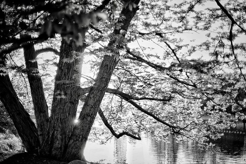 Tree Black And White Planten Un Blomen Plant Tree Nature No People Growth Day Low Angle View Branch Beauty In Nature Outdoors Sky Tranquility Sunlight Pattern Backgrounds Close-up Water Silhouette Trunk Tree Trunk