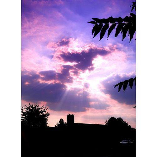 Tree Bird Sunset Silhouette Blue Sky Cloud - Sky Animal Themes