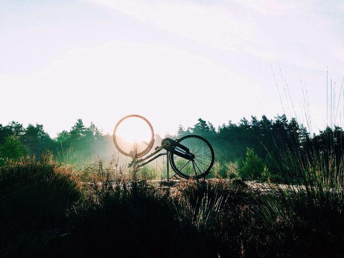 • Memoir • The Illuminator - 2014 EyeEm Awards Sunset IPhoneography Nature
