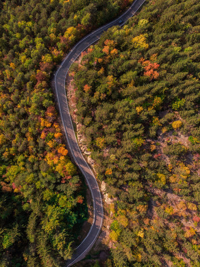 High angle view of road amidst trees during autumn