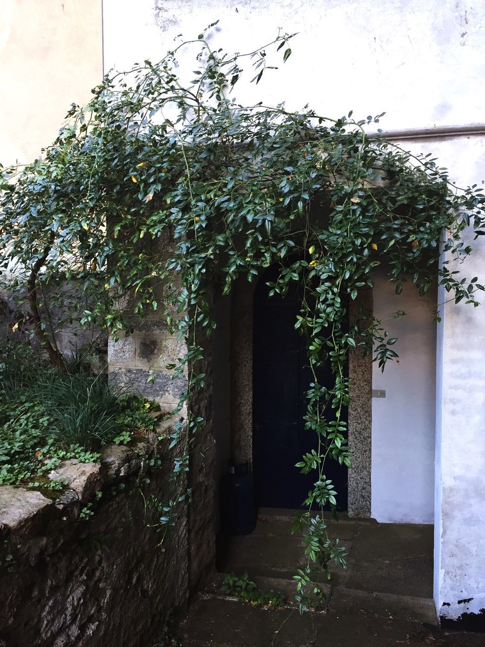 architecture, door, building exterior, built structure, house, entrance, no people, day, plant, ivy, outdoors, entry, growth, tree, nature