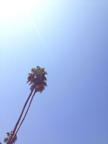 la / even the trees are just so cali Palm Trees Summer