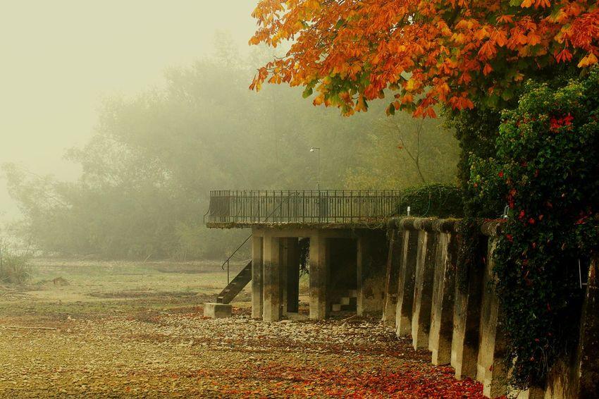 Colorful Lake View Lakeside Tree Autumn Water Leaf Sky Foggy Leaves Fallen Fog Mist