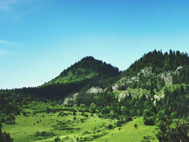 Mountain View Nature_collection Eye4photography  EyeEm Nature Lover Outdoors Taking Photos Enjoy Your Life From Where I Stand Green From My Point Of View Landscape_Collection Poland Ladyphotographerofthemonth Pieniny