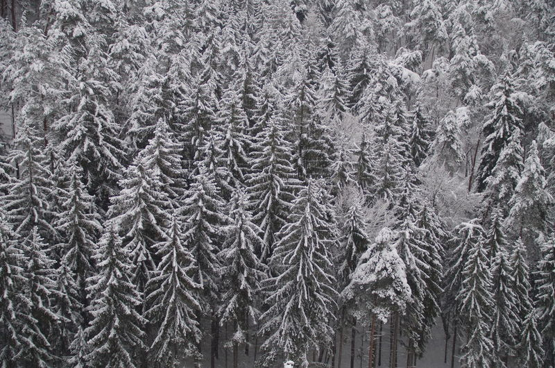 Frozen forest Backgrounds Beauty In Nature Central Europe Central European Climate Close-up Cold Temperature Czech Republic Czechia Day Forest Frost Full Frame Nature No People Outdoors Snow Spruce Trees Winter WoodLand Woods