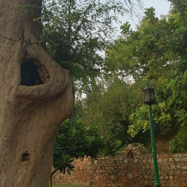 Home Sweet Home Safe Birds Qutbminar Delhi Nest Evening Interesting Fun Care Loving