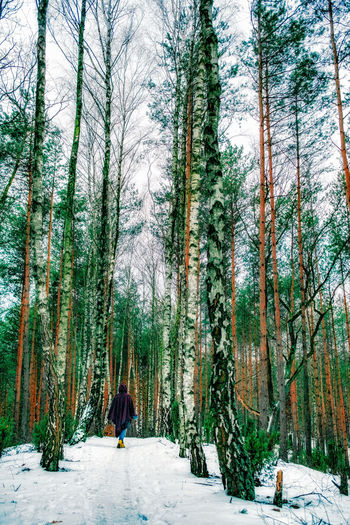 Riding Hood strolls into the winter woodland. [[]] It was really cold. Beauty In Nature Cold Temperature Forest Landscape Leisure Activity Lifestyles Nature One Person Outdoors People Pine Woodland Scenics Tranquility Tree Trunk Winter WoodLand