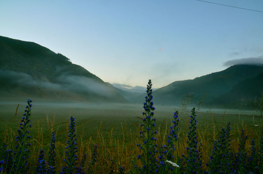 Foggy flowers, New Zealand Dew Morning New Zealand Scenery Agriculture Beauty In Nature Day Field Flowers Fog Growth Landscape Mountain Mountain Range Nature New Zealand No People Outdoors Plant Purple Rural Scene Scenics Sky Sunrise Tranquil Scene Tranquility