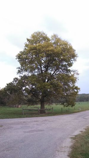 Enjoying Life Taking Photos TreePorn Trees
