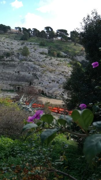 https://en.m.wikipedia.org/wiki/Roman_Amphitheatre_of_Cagliari Sardinia Sardegna Italy  Anphitheater Old Ancient History Ancient Flower Nature Outdoors Beauty In Nature No People Day Plant Sky Landscape Fragility Tranquility Tree Freshness