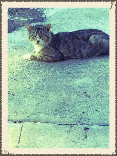 Cat Domestic Cat Feline Cracked Sidewalks One Animal Pets No People