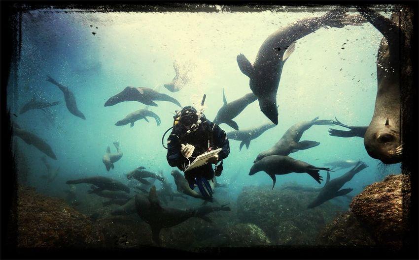 ? www.oceana.org ? Taking Photos Underwater Photografy Oceanachile Lobosmarinos