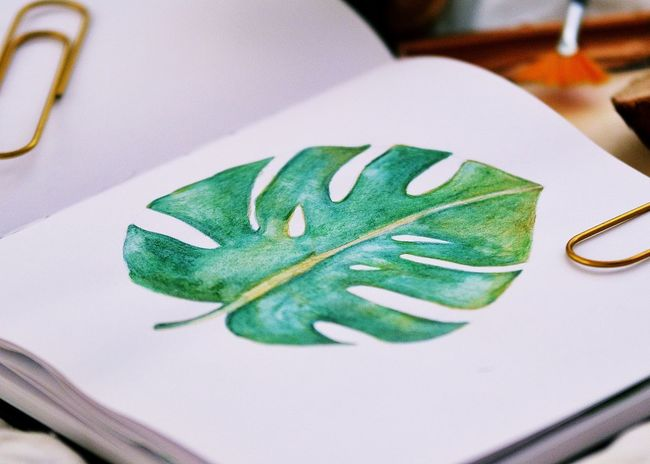 Green Natural Nature Pain Plant Book Close-up Day Detail Flower Freshness Green Color Hobby Illusion Indoors  Leaf Monterano No People Painting Plantlove Table Watercolor Watercolor Painting