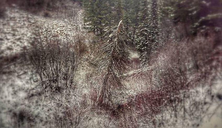 This dead tree is a trooper. Stillstanding Idaho Idahoforests Ilovetrees Oldpine Pine Forest Dead Tree Stillcool Photooftheday Favoriteedit Edited Snapseed PNW Upperleftusa Naturephotography Naturehippys Nature Naturelovers Nature_perfection Natureza Vintagestyle Perfection