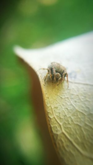 Smallest Spider Spider Spider World One Animal Insect Animals In The Wild Animal Themes Animal Wildlife No People Green Color