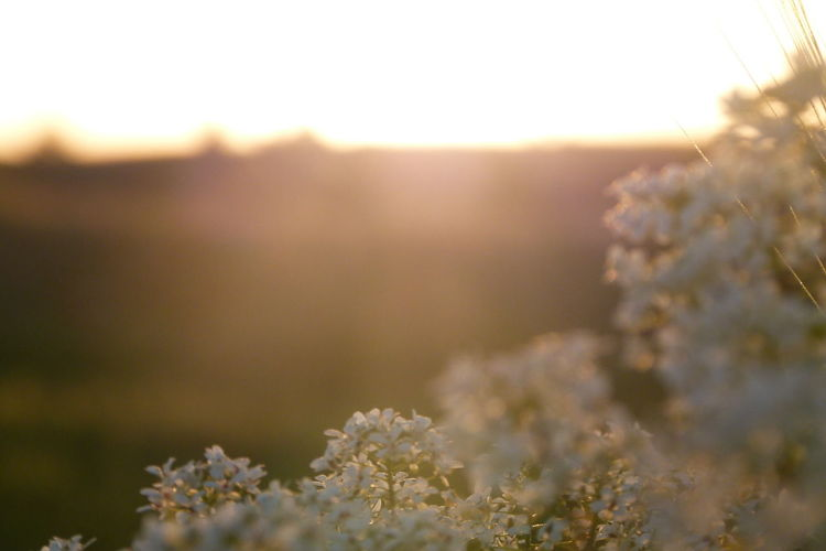 Plant Nature Selective Focus Beauty In Nature Flower Flowering Plant No People Growth Tranquility Day Freshness Tree Land Springtime Outdoors Close-up Environment Sunlight Field Landscape EyeEmNewHere