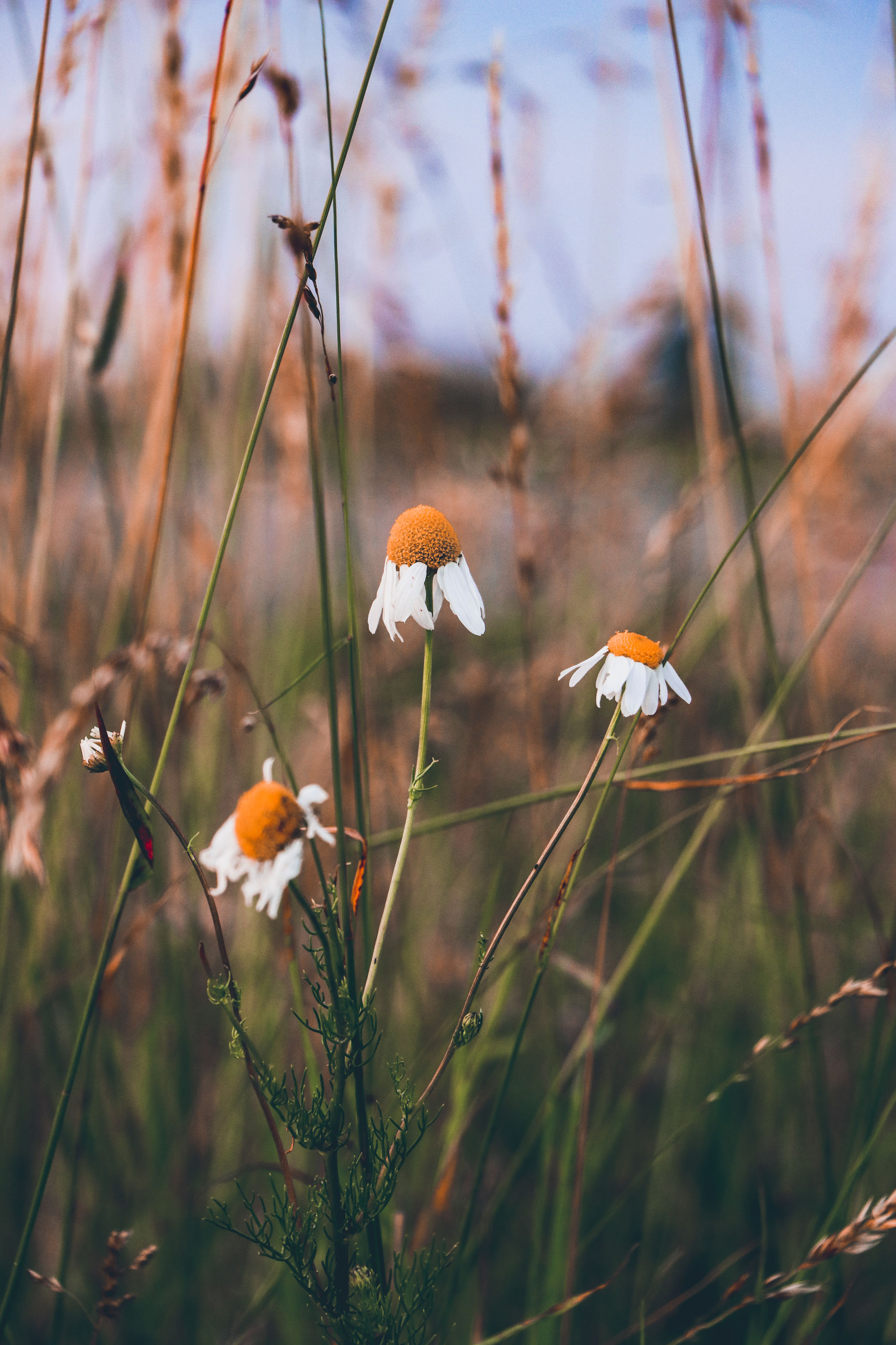 nature, plant, grass, flower, autumn, leaf, sunlight, beauty in nature, prairie, no people, flowering plant, meadow, growth, macro photography, land, natural environment, focus on foreground, close-up, outdoors, sky, freshness, food, day, fragility, animal wildlife, wildflower, field, tree, environment, animal, landscape, tranquility, selective focus, morning, non-urban scene, wildlife, animal themes