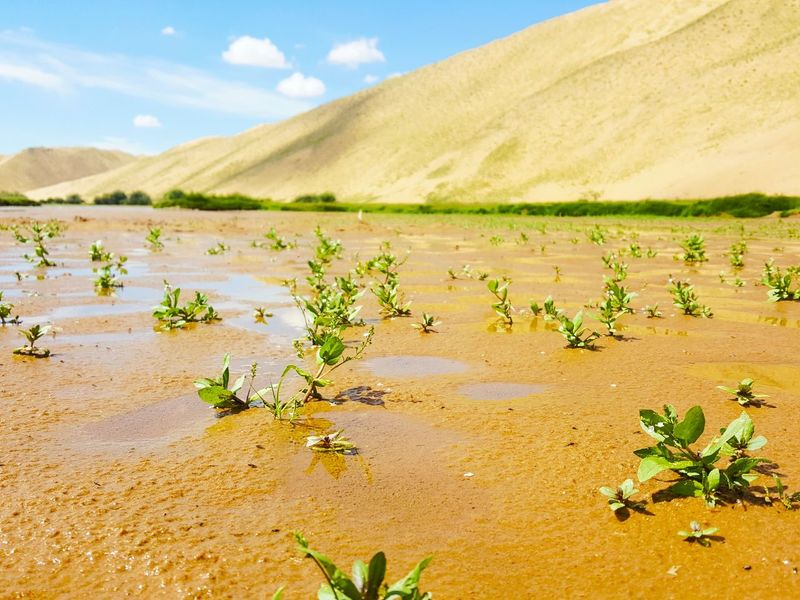 Mongolia Nature 배낭여행 Summer Travel River Nice Day Summer Hot Weather Gold Sand Desert Sand Water Nature Reserve