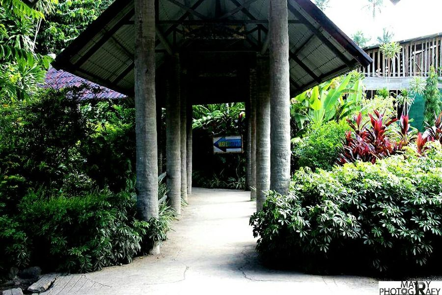 Photographer Mylife Philippines Photos Snap:barradas_mary98 Paradise EyeEm Best Shots Taking Photos