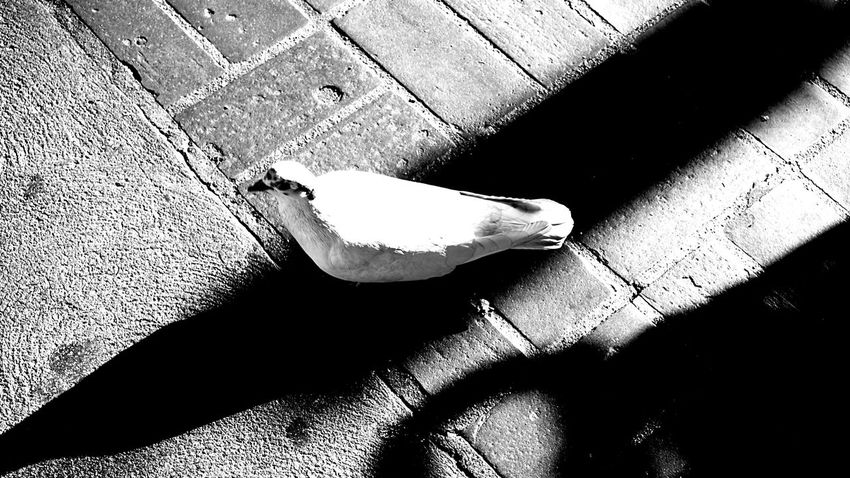 Blackandwhite Black And White Black & White Blackandwhite Photography Birds Olvera Street Studies Of Whiteness White Album Whiteness Monochrome Shadow Gettyimages Getty Images Getty X EyeEm Getty & Eyeem Getty X EyeEm Images My Favorite Photo Bnw Bnwphotography