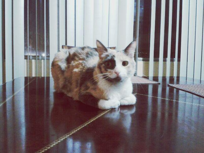Kitty Cats Awww Socute