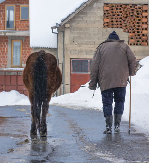 Rear view of a horse on snow