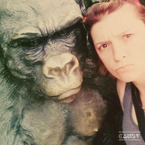 GorileZnervirane Fuljimjedolgcas