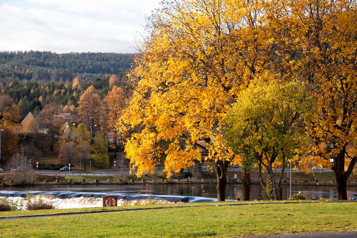 Kongsberg Autumn Beauty In Nature Change Foliage Grass Green Color Growth Kongsberg Nature Norway Orange Outdoors Park Park - Man Made Space Season  Tranquil Scene Tree Yellow October