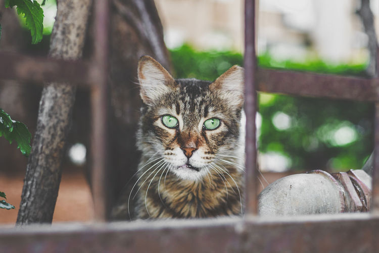 beautiful cat EyeEmNewHere EyeEm Nature Lover Eyem Cute Cats EyeEm Selects Pets Portrait Tree Feline Looking At Camera Domestic Cat Kitten Whisker Cute Alertness Animal Hair Hairy  Highland Cattle Animal Nose It's About The Journey
