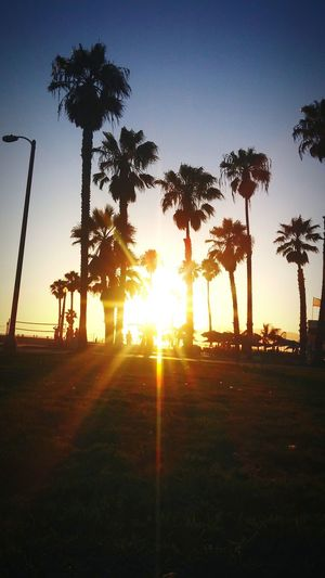 Palm Trees Sunset Californication🎶 Sea CaliLife Chilling Toplife Being A Beach Bum