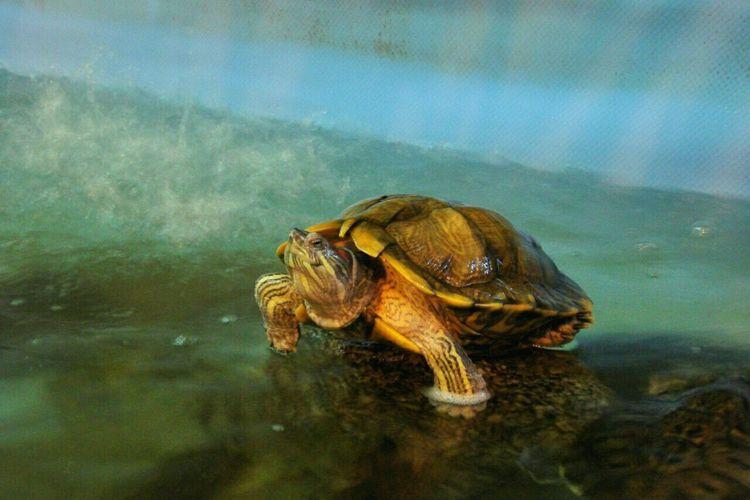 Turtle 🐢 Animals Unicorn Relaxing Photography Zoo Novosibirsk Followme Walking Around EyeEm Gallery