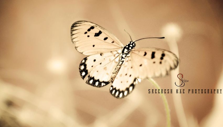 Beauti butterfly