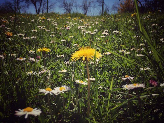 Merveilleux printemps bis