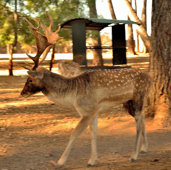 Deer standing in a zoo