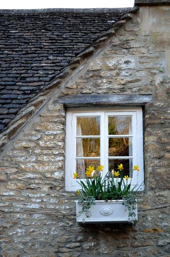Flowers growing on window box of house